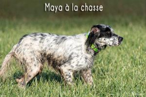 maya-a-la-chasse