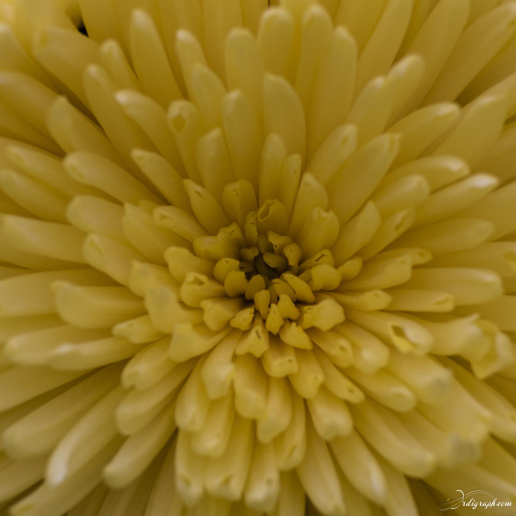 Keukenhof Fleur-5